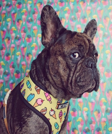 Pet-Harness-for-French-Bulldog-Small-Medium-Dogs-Leashes-Pug-Puppy-Frenchie-Pet-Harness-Vest-Walking-Dog-Lead-Leash-Pet-Products