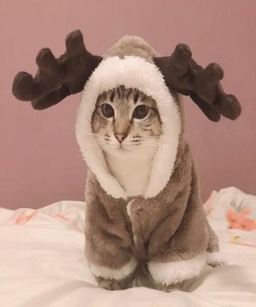 Winter-Cat-Clothes-Warm-Fleece-Pet-Costume-For-Small-Cats-Kitten-Jumpsuits-Clothing-Cat-Coat-Jacket-Pets-Dog-Clothes-32962308621