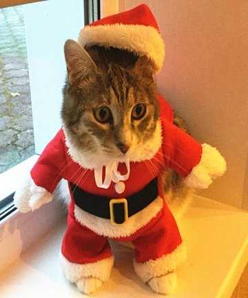 Christmas-Cat-Costumes-Funny-Santa-Claus-Clothes-For-Small-Cats-Dogs-Xmas-New-Year-Pet-Cat-Clothing-Winter-Kitty-Kitten-Outfits-