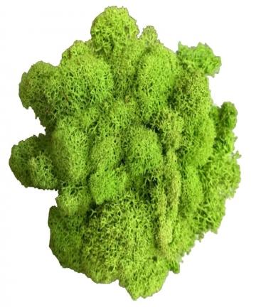 20g-Artificial-plant-eternal-life-moss-Garden-home-decoration-wall-DIY-Flower-material-Mini-Garden-Micro-Landscape-Accessories-4