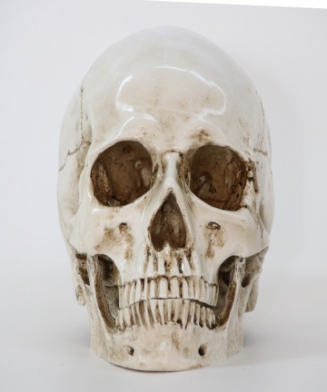 Statues-Sculptures-Resin-Halloween-Home-Decor-Decorative-Craft-Skull-Size-11-Model-Life-Replica-High-Quality-32953218173